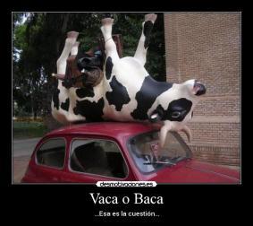 Vacaobacaesaeslacuestion